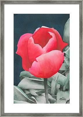 Single Tulip Framed Print