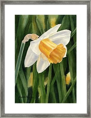 Single Yellow Daffodil Framed Print by Sharon Freeman