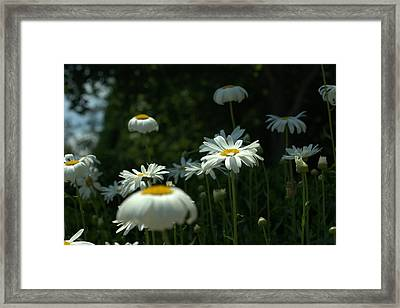Singled Out Framed Print by GuitarGeeks Photography