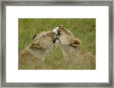 Sisterly Love Framed Print by Michele Burgess