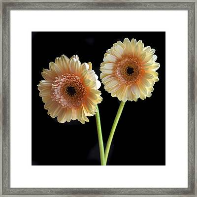 Sisters. Framed Print by Terence Davis