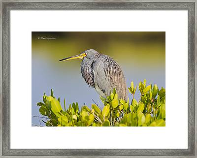 Sit'in In The Morn'in Sun Framed Print