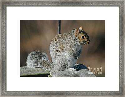 Framed Print featuring the photograph Sittin Pretty by Mark McReynolds