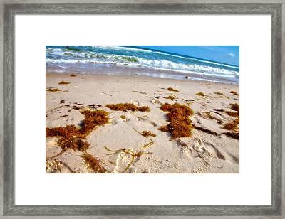 Sitting On The Beach Framed Print by Toni Hopper