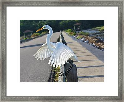 Sitting On The Fence Framed Print by Paulette Thomas