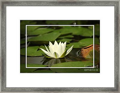 Framed Print featuring the photograph Sitting Pretty by Lori Mellen-Pagliaro