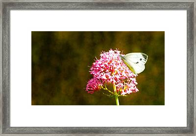 Sitting Pretty Panorama Framed Print by Sharon Lisa Clarke