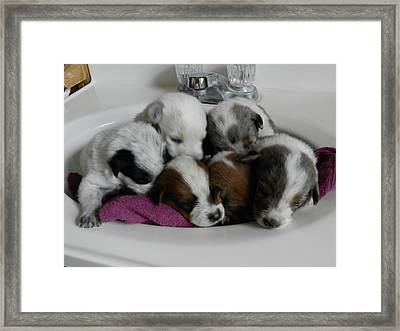 Six Clean Pups Framed Print by LaDonna Vinson