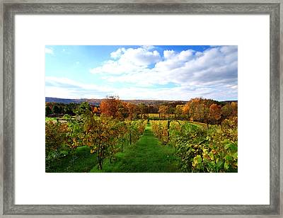 Six Miles Creek Vineyard Framed Print by Paul Ge
