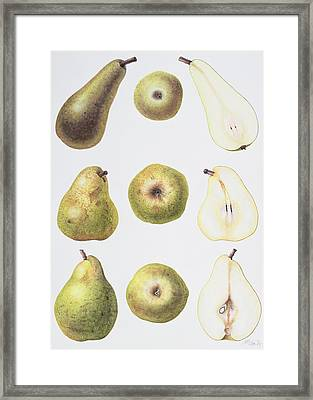 Six Pears Framed Print by Margaret Ann Eden