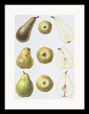 Fruit Still Life Drawings Framed Prints