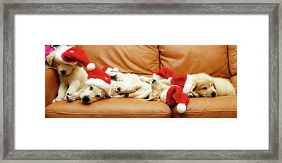 Six Puppies Sleep On Sofa, Some Wear Santa Hats Framed Print by Karina Santos