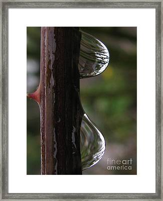 Sizable Framed Print by Tina Marie
