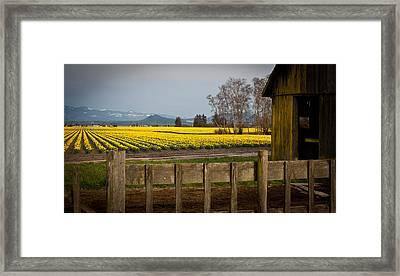 Skagit Valley Farm Framed Print by Mike Reid