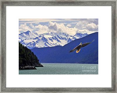 Skagway Bald Eagle Framed Print by Jack Moskovita