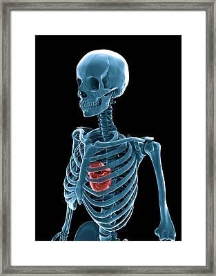 Skeleton And Heart, Artwork Framed Print by Andrzej Wojcicki