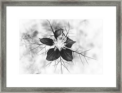 Skeleton Flower Framed Print by Michael Ambrose