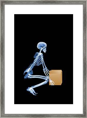 Skeleton Lifting A Box Correctly Framed Print