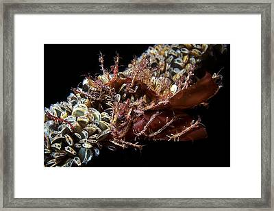 Skeleton Shrimp And Mussels Framed Print by Alexander Semenov
