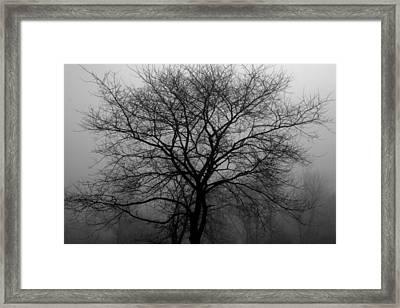 Skeletons In The Fog Framed Print