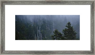 Skeletons In The Mist Framed Print