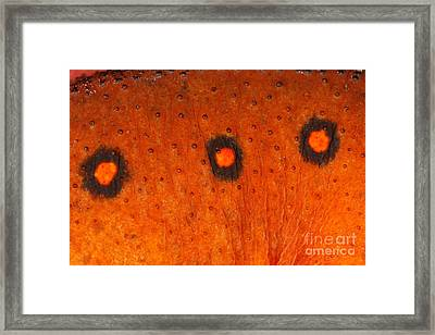 Skin Of Eastern Newt Framed Print by Ted Kinsman