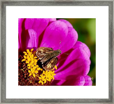 Skipper And A Pretty Flower  Framed Print