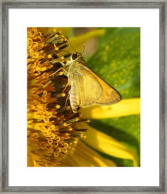 Skipper And Sunflower Framed Print by Sandi OReilly