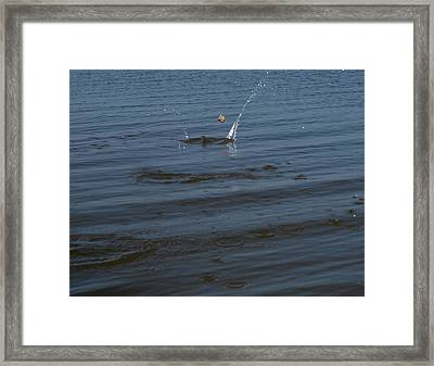 Skipping Stone Framed Print by Joshua House
