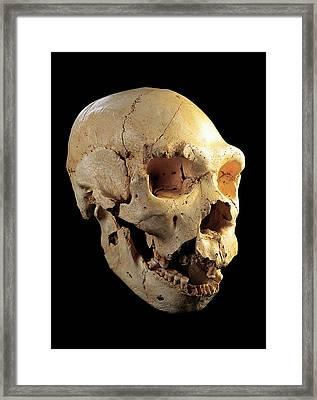 Skull 5, Sima De Los Huesos Framed Print by Javier Truebamsf