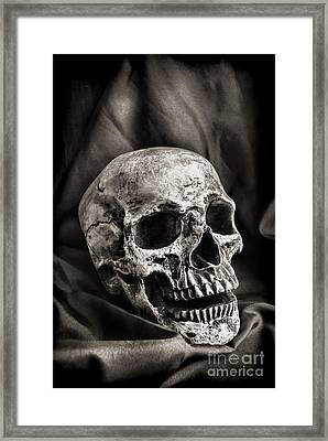 Skull Framed Print by HD Connelly