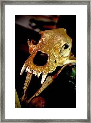 Skull In The Dark Framed Print by Swainson Holness