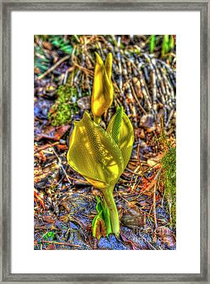 Skunk Cabbage - 2 Framed Print by Rod Wiens