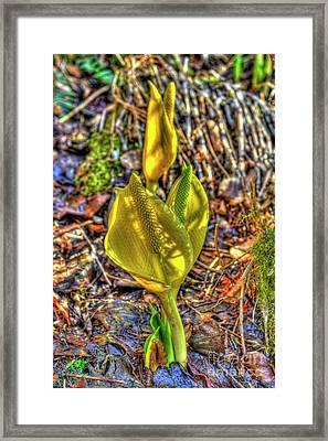Skunk Cabbage - 2 Framed Print