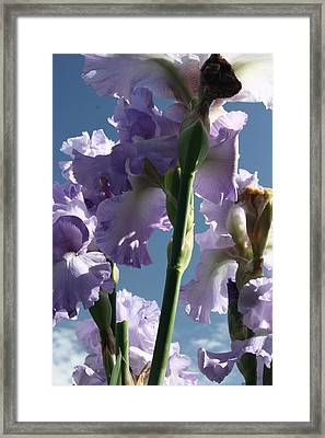 Sky And Flowers Framed Print
