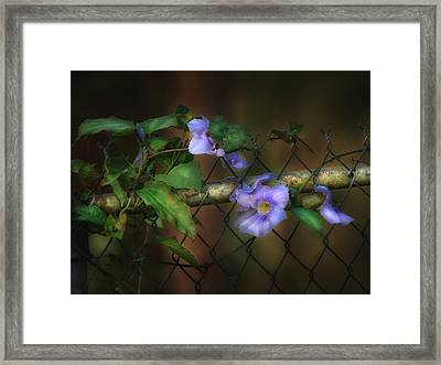 Skyflower Framed Print