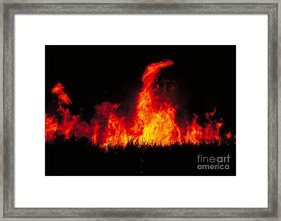 Slash And Burn Agriculture Framed Print by Dante Fenolio