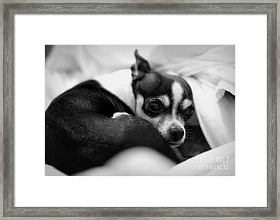 Sleep Framed Print by Bret Worrell