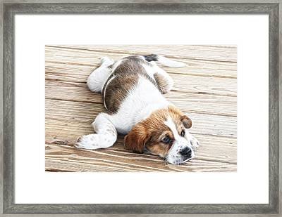 Sleep Where You Fall Framed Print by Tilly Williams