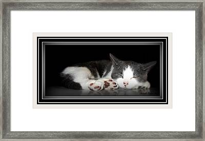 Framed Print featuring the photograph Sleeping Beauty by Danielle  Parent