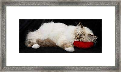 Sleeping Birman Framed Print by Melanie Viola