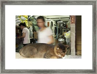 Sleeping Cat In Laundry Mat Framed Print