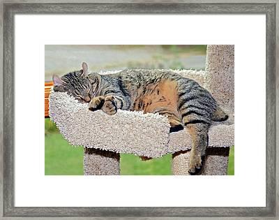 Sleeping Cat Framed Print by Susan Leggett