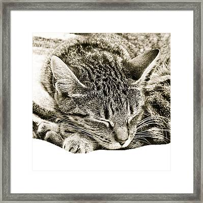 Sleeping Cat Framed Print by Tom Gowanlock