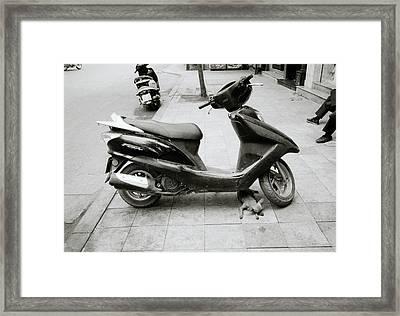 Sleeping Chihuahua Framed Print by Shaun Higson