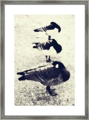 Sleeping Ducks Framed Print by Joana Kruse