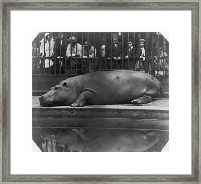 Sleeping Hippo Framed Print by Count De Montizon