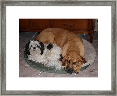 Sleeping In A Circle Framed Print by Val Oconnor