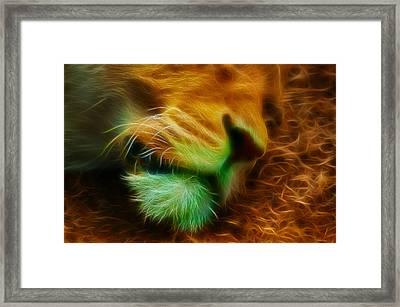 Sleeping Lion 2 Framed Print