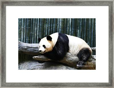 Sleeping Panda Framed Print